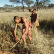 Bushmen hunters in a fields search — Stock Photo