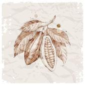 手工绘制的可可豆的树枝上 — 图库矢量图片