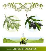 Vector conjunto - ramas de olivo — Vector de stock