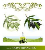 Vector set - olive branches — Vector de stock