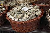 Ostrygi rynku w cancale, Francja — Zdjęcie stockowe
