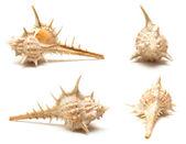 Conjunto de macro cuatro conchas — Foto de Stock