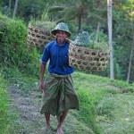 Farmer on the rice field — Stock Photo