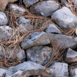 Rocks and straw background — Stock Photo