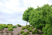 Tree and brush background — Stock Photo