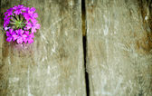 Purple flower wooden slat background — Stock Photo