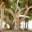 Stock Photo: Jupiter FloridTree