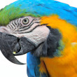 Stock Photo: Parrot macaw