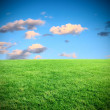 Stock Photo: Landscape meadow and sky