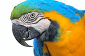 Parrot macaw — Stock Photo