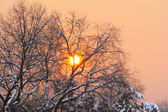 Red sunset at winter — Stock Photo
