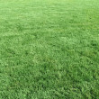 Stock Photo: Natural short grass