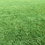 Natural short grass — Stock Photo
