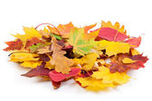 Heap of autumnal leaves — Stock Photo