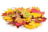 Hoop van herfst bladeren — Stockfoto