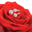 Stock Photo: Red rose with a ring with jewels and water drops