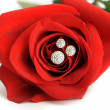 Red rose with a ring with jewels closeup — Stock Photo #8534613