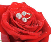 Red rose with a ring with jewels and water drops — Stock Photo