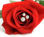 Red rose with a ring with jewels closeup — Stock Photo