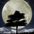 Silhouette of a tree against the big moon — Stock Photo