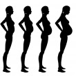Stages of pregnancy of the woman - ストック写真