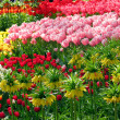 Blooming garden in spring with tulips, Netherlands, Europe — Foto de stock #7976949