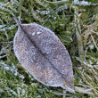 Stock Photo: Leaf with hoar-frost in winter