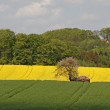 Landscape in spring with cherry tree and rape field, Lower Saxony, Germany — Stock Photo