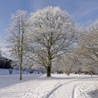 Stock Photo: Sppark in winter - Bad Rothenfelde, Osnabruecker Land, Germany