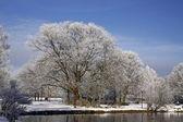冬、バート ・ ラーアー、スパ公園、ドイツで池の風景と木 — ストック写真
