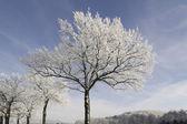 在希特勒、 osnabruecker 土地、 萨克森、 德国白霜的树 — 图库照片
