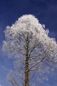 Tree with hoarfrost in winter, Bad Rothenfelde, Germany — Stock Photo