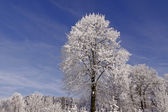 Trees with hoarfrost in Hilter, Osnabruecker land, Lower Saxony, Germany — Stock Photo