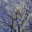 Tree with hoarfrost in winter, Lower Saxony, Germany, Europe — Stock Photo