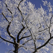 Tree with hoarfrost in winter, Lower Saxony, Germany, Europe - Stock Photo