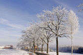 Street with deciduous trees with hoarfrost in winter, Germany — Foto Stock