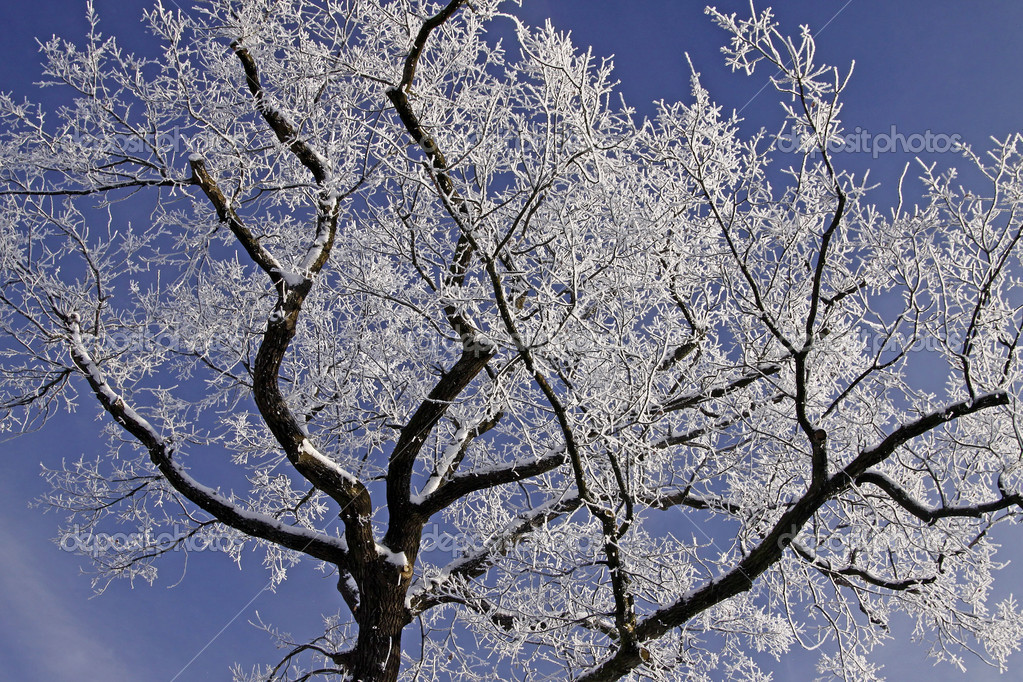 Tree with hoarfrost in winter, Lower Saxony, Germany, Europe - Laubbaum mit Rauhreif im Winter, Niedersachsen, Deutschland   Stock Photo #8769425