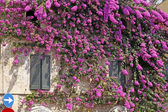 Sirmione, house in the old part of town with bougainvillea glabra — Stock fotografie