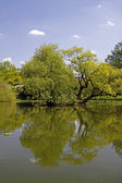 Pond landscape with willows in spring, North Rhine-Westphalia, Germany — Stock Photo