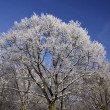 Trees with hoarfrost in winter, Lower Saxony, Germany — Stock Photo #8923559