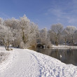 Trees with pond landscape in winter, Germany — Stock Photo