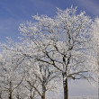 Trees with hoarfrost in winter, Lower Saxony, Germany — Stock Photo