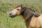 Pferd auf einer wiese in cornwall, südwesten england, europa — Stockfoto