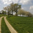 Footpath with cherry trees in Hagen, Lower Saxony, Germany, Europe — Stock Photo #9004731