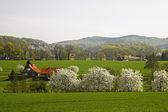 Paesaggio di primavera con gli alberi di ciliegio in aprile, osnabruecker terra, germania — Foto Stock