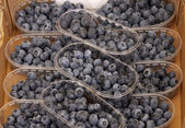 Blueberry, bilberry (Blueberries, bilberries) — Stock Photo