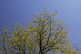 Tree with fresh green leaves in spring, Germany — Stock Photo