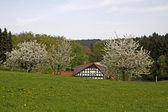 Spring landscape with half-timbered house, Germany — Stock Photo