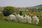 Spring landscape with cherry trees in April, Germany — Stock Photo