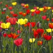 Tulip mixture in spring, Germany, Europe — Stock Photo